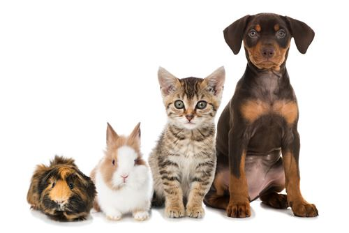 dogs and cats and other furry pets
