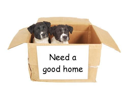 two dogs in a box with need a good home on it